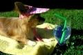 """""""Chihuahua suvi"""" võidupildid"""