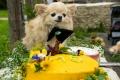 Chihuahua Kennu 10. sünnipäev