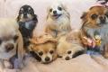 Chihuahua Mathilda sünnipäevapidu