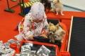Chihuahuade trikikooli kaheksanda hooaja avamine