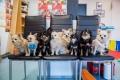 Chihuahuade trikikooli lõpupidu 2018