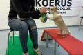 Chihuahuade trikitund
