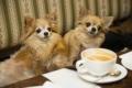 Kaheksas sülekoerte kohvikukoolitus