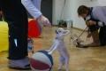 Sülekoerte triki- ja mängukool