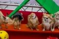 Lemmikule Kodu! Fotod: Martin Ilustrumm