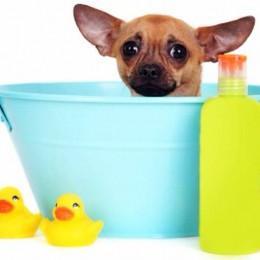 Miks märg koer haiseb?