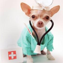 Loomaarst: Mida varem lemmikloomal kasvaja avastatakse, seda tulemuslikumat ravi saab pakkuda
