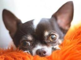 NÕUANNNE: Kuidas kaitsta lemmiklooma äikesetormi ajal