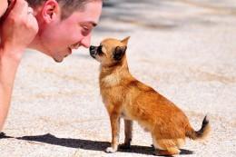 Kas koerad on võimelised ära tundma inimeste näoilmeid? Teadlased annavad sellele küsimusele vastuse