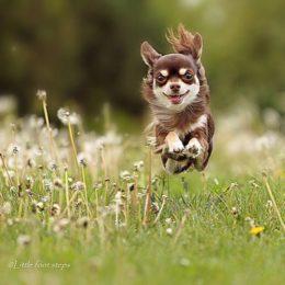 Kevadine õietolm kimbutab: allergiatele vastuvõtlikumad koeratõud ning kuidas allergiat ära tunda