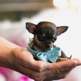 Kaheksa hämmastavat asja, mida su koer sinu kohta tajuda suudab