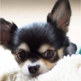 Lemmikloomal seisab ees operatsioon — mida peaks loomaomanik sellel puhul teadma?