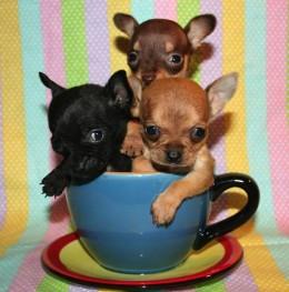 Koer kontoris langetab stressi ja tõstab motivatsiooni