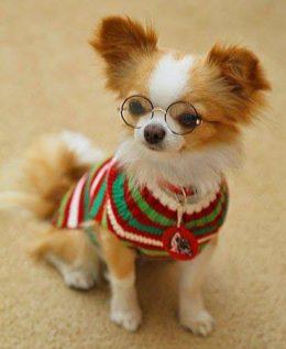 Purustame levinud müüdid: 14 müüti koerte käitumise kohta