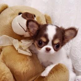 Teadlased: koerad võivad tunda armukadedust