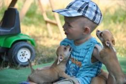 Rootsi teadlased leidsid olulise põhjuse, miks tasub perre võtta koer