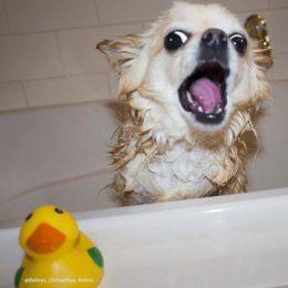 Kolm viga, mida koera pesemisel kindlasti vältima peaks