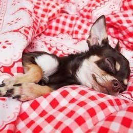 Millest räägib koera magamispoos?
