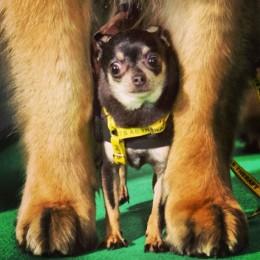 Chihuahuade trikikool 14. aprillil