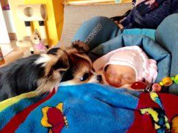 Unenägude seletaja: mida tähendab, kui näed koertega seotud unenägusid?