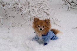 Kaitse oma lemmikut külma talve eest
