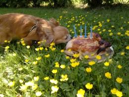 Kondiragistamine ehk kas ning missuguseid konte koerale anda