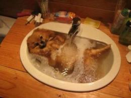 Liigne pesemine on loomale kahjulik