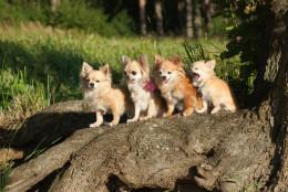 Miks koerte jalad lõhnavad nagu maisikrõpsud ehk huvitavad faktid koerte käppade kohta