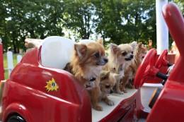 Millise taksoga tasub lemmiklooma sõidutada?
