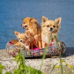Kõik märjast ekseemist ehk hot spotist: Kuidas ravida ning koerad ekseemivabad hoida?