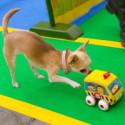 Chihuahuade trikikool 9.veebruaril