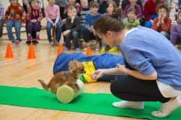 Esimene Chihuahuade Trikikooli tund uuel aastal