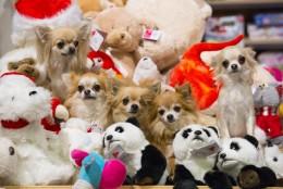 Miks premeerida oma koera mänguasjaga ning kuidas lelude eluiga pikendada?