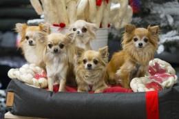 Koera kehakeel: mida koera sabaliputus ütleb?