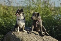 Esimest korda koeraomanikuks? Nõuandeid, kuidas valida neljajalgset sõpra