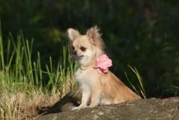 Teadlased jõudsid järeldusele, et emased koerad on sõbralikumad. Aga mis võib selle põhjus olla?