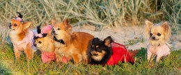 Koerte hooldamine ehk grooming: nõuandeid, kuidas saada koera kasukas puhtaks ja läikima