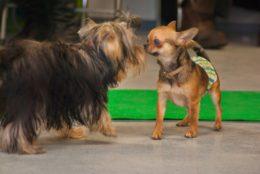 Õpi lugema koera kehakeelt: märgid, mis näitavad, et koer võib sind rünnata
