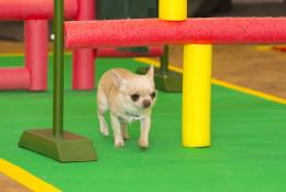 Chihuahuade trikikooli trennid jaanuaris