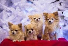 10 põnevat fakti koerte kohta, mis isegi koeraomanikke üllatavad
