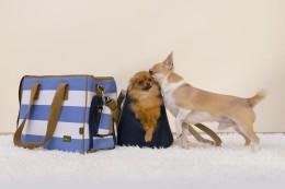 Miks koerad otsa vaadates pea ühele küljele kallutavad?