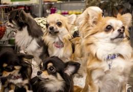 Teadlased on veendunud: ära tee oma koerale tünga — ta näeb sinust läbi