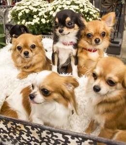 Ole mõistlik, hoia koer aastavahetusel toas!