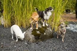 TASUB TEADA: kevadised ohud aias, mis võivad lemmikloomadele saatuslikuks saada