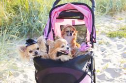 Perre sünnib laps: kas koer võib tunda armukadedust ja kuidas ennetada probleeme?