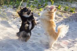 Probleemsed koeraomanikud vs probleemsed koerad