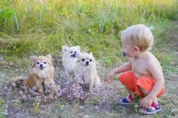 Peres koera pidamine aitab kaitsta last allergiate eest