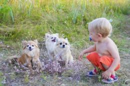Lemmikloom aitab lapsel terve olla