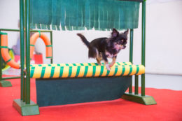 Chihuahuade trikitund 10. jaanuaril