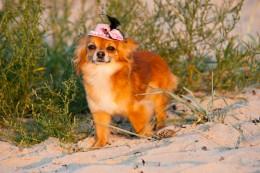 Miks koerad võõrale lähenedes kaarega kõnnivad?